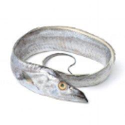 White Ribbon Fish
